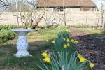 boomgaard-1-voorjaar-met-narcissen.jpg