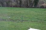 grasland-met-groene-specht.jpg