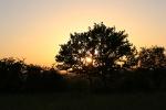 houtwal-in-de-zomeravondzon.jpg