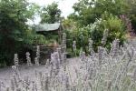 kruidentuin-waterput-en-lavendel.jpg